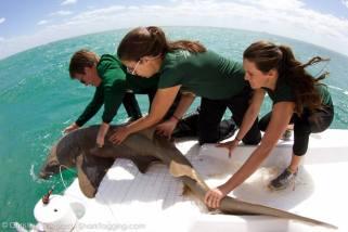 4-1-14 Nurse shark release