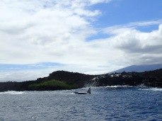 An orca with Volcan Cerro Azul in the background.